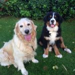 Pet Sitters Dublin - Dog Walkers Dublin