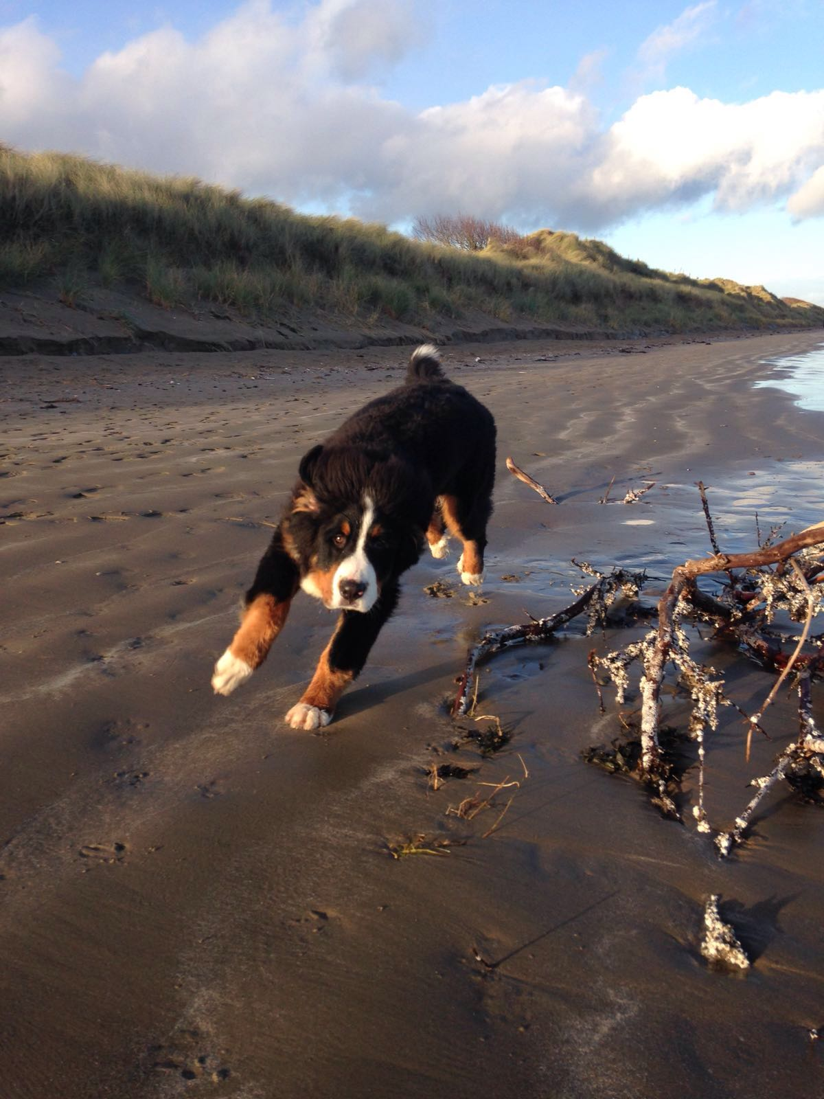 Can You Take Your Dog Abroad On Holiday